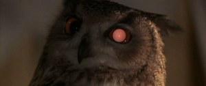 Imagen 2. Ojos búho.